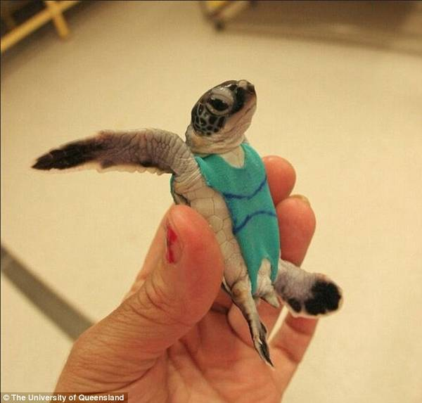 tartarughe costumi 1