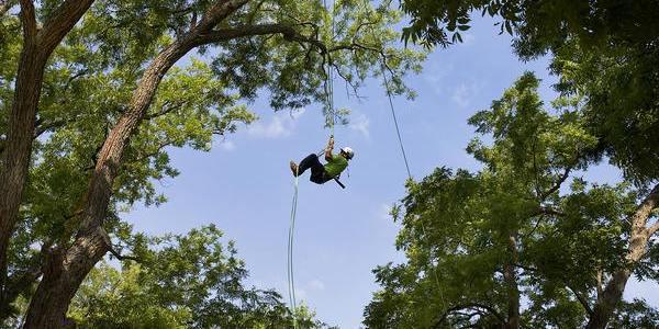tree climbing cover