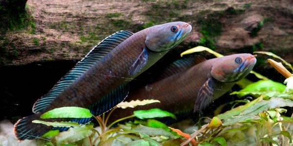 wwf pesci camminano