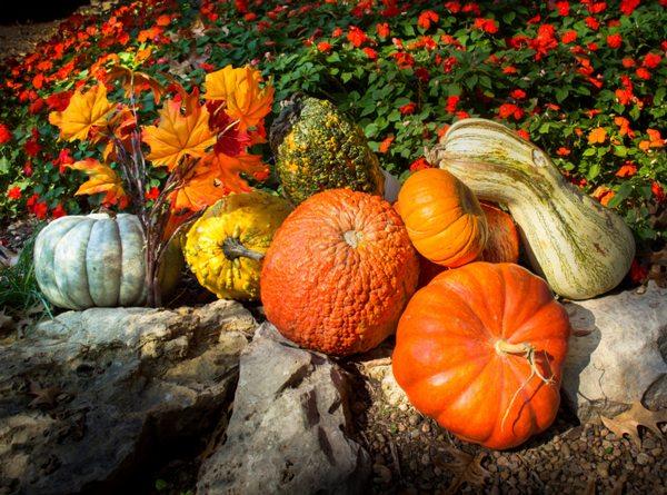 zucche orto autunno
