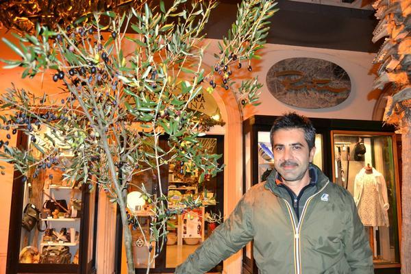 alberi taranto 1