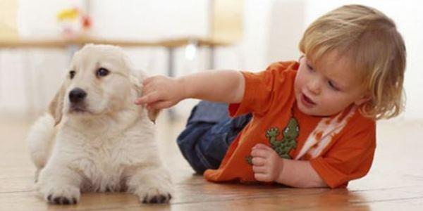 asma cani