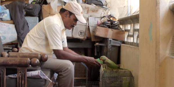 birdman pappagalli4