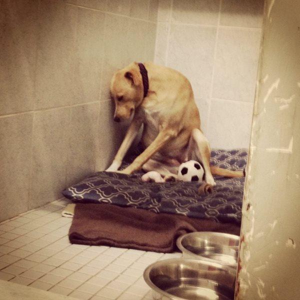 cane triste1
