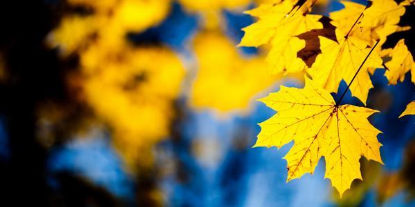 carenze nutritive piante foglie