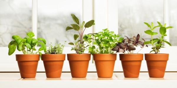 coltivare orto spazi ristretti