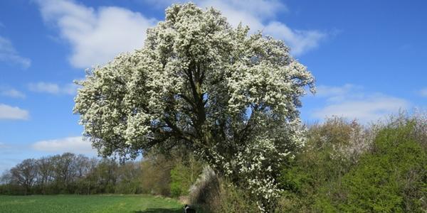 cubbington tree cover