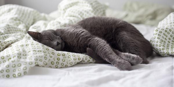 gatti letto cover