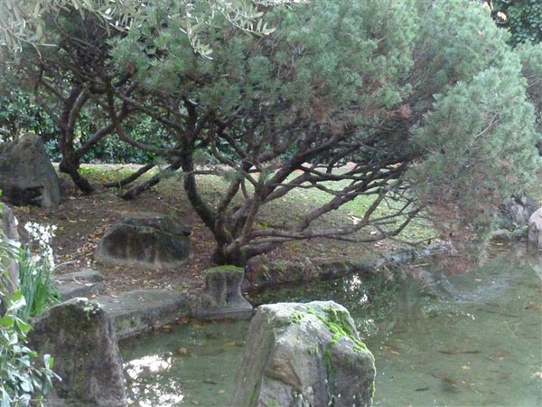 giardino giappo11