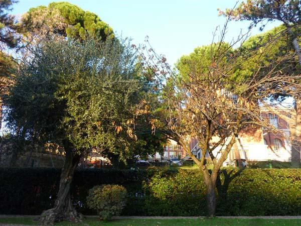 giardino giappo13