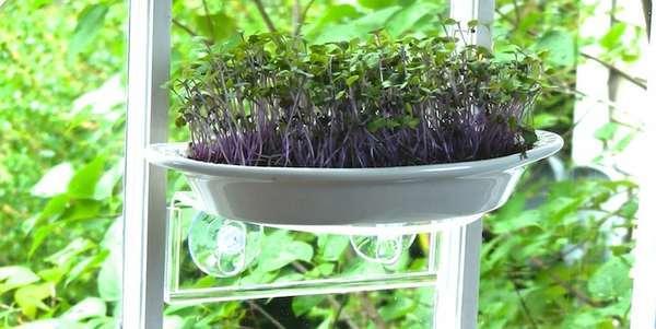 orti 2 micro greenz