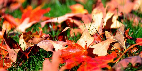 rastrellare foglie cadute autunno