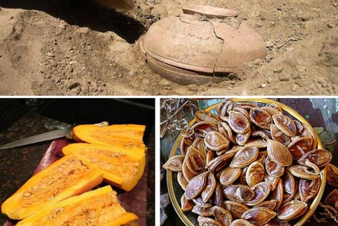 semi antica varieta zucca
