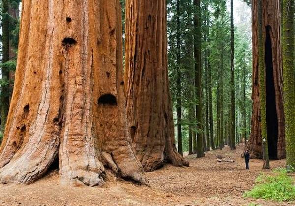 Sequoia National Park.jpg.638x0 q80 crop smart