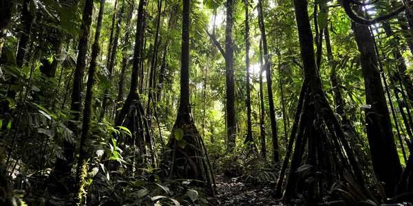 alberi ecuador