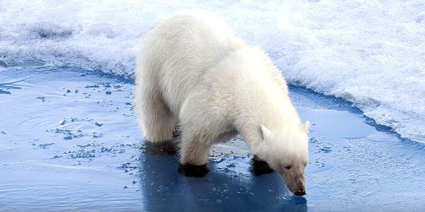 artico ghiaccio