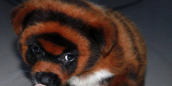 cani cina tigre 2