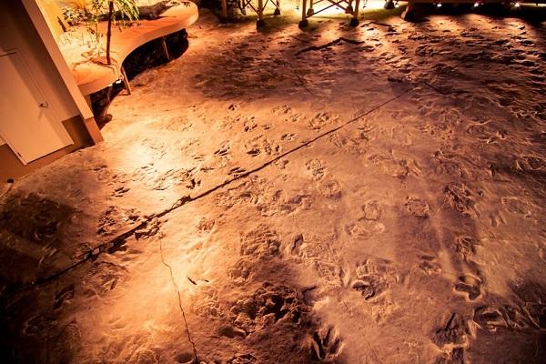 dinosaur state park.jpg.838x0 q80