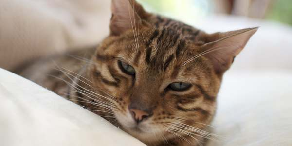 gatti m fronte