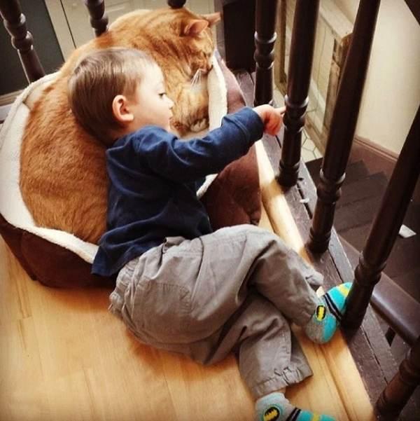 gatto bambino 5