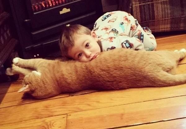 gatto bambino cover
