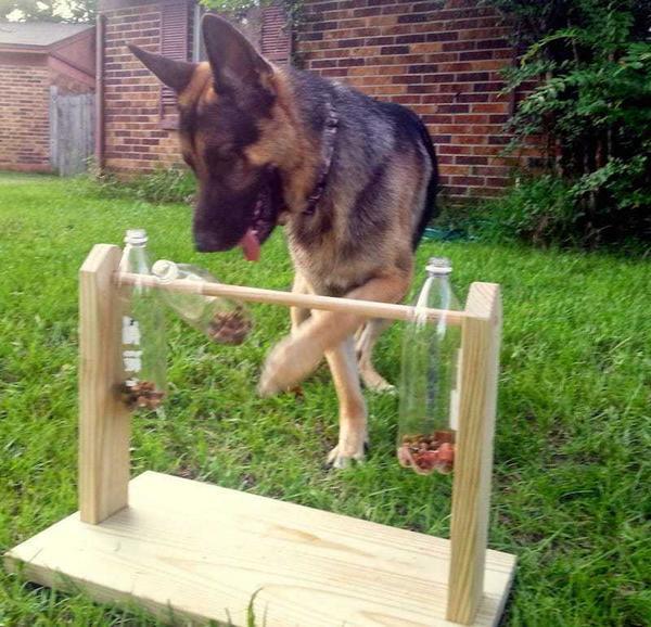 giocattolo cani 4