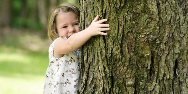 alberi anti inquinamento