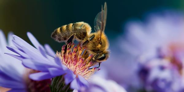api pesticidiEpa