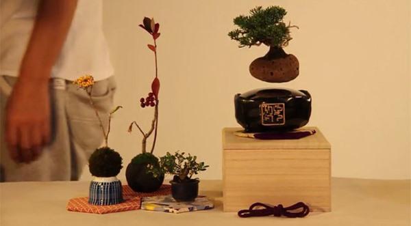 bonsai fluttuante1