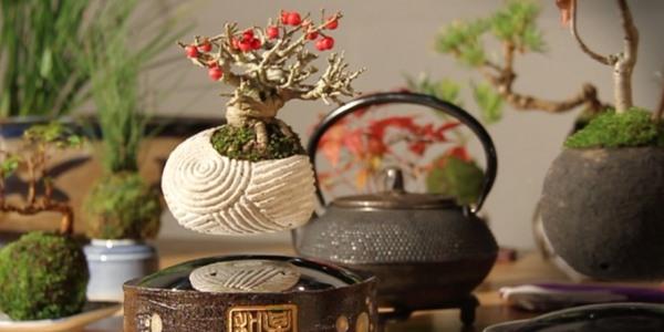bonsai fluttuante2