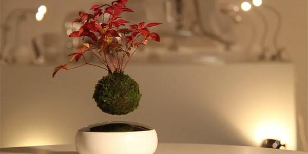 bonsai fluttuante4