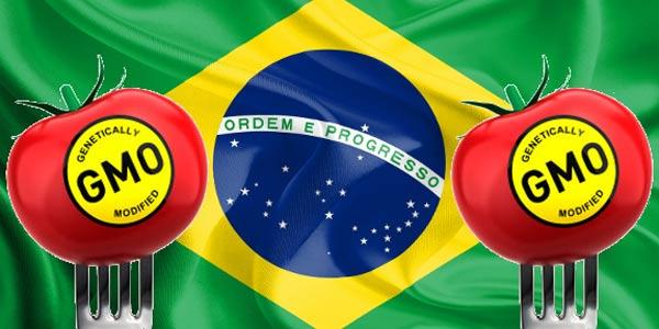 brasile ogm