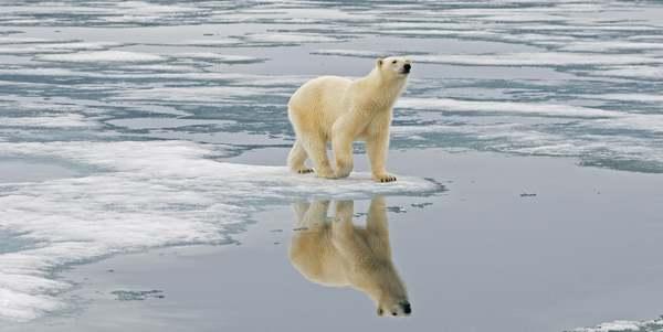 cambiamenti climatici animali estinzione