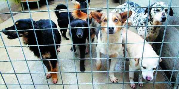cani ergastolani del canile di torino 31461