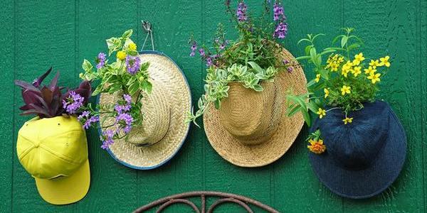 decorare casa piante