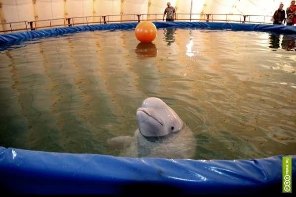 delfinari 4
