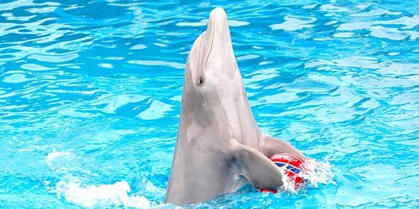 delfino lav