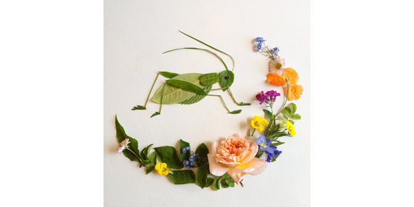 flora opera 1