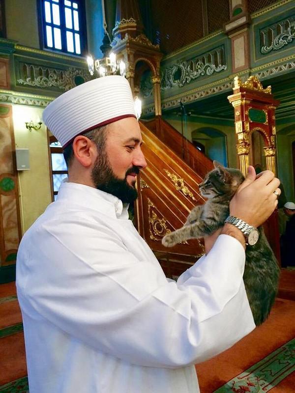 gatti moschea 1
