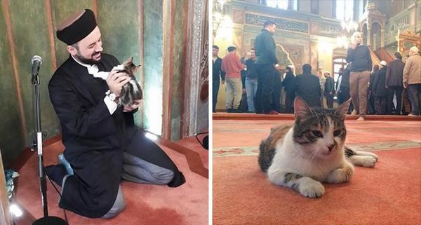 gatti moschea 2