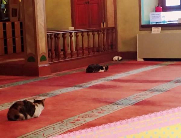 gatti moschea 3