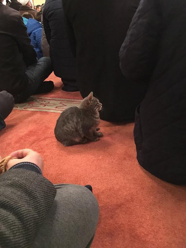 gatti moschea 4