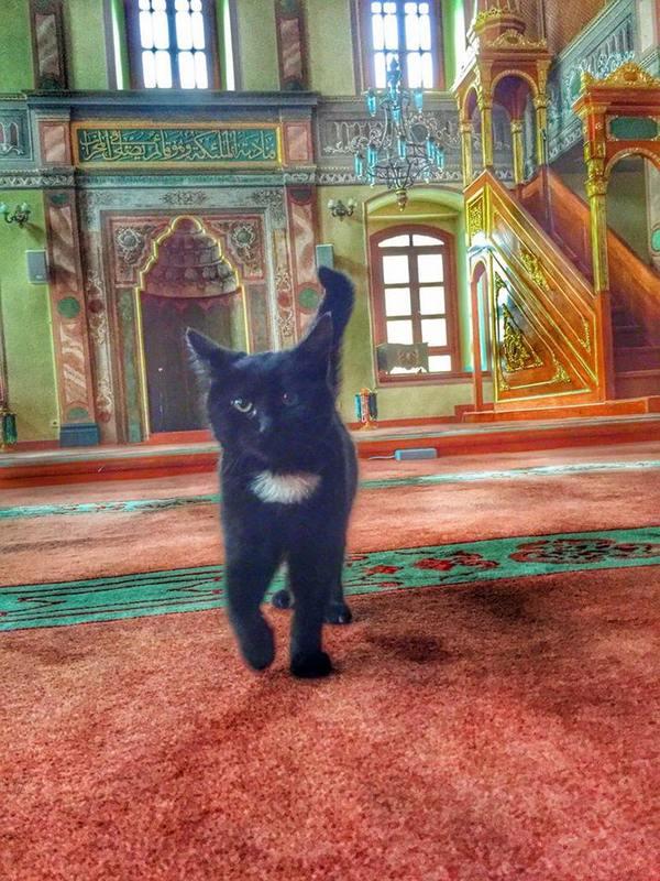 gatti moschea 5