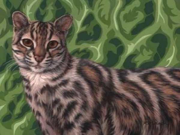 gatto marmorizzato
