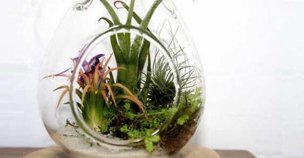 piante casa 5