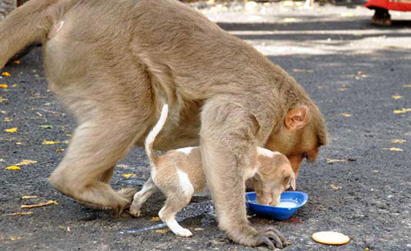 scimmia mamma2