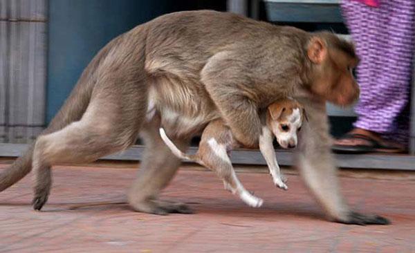 scimmia mamma3