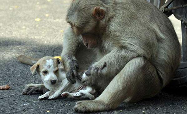 scimmia mamma4
