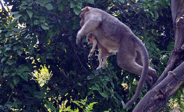 scimmia mamma5