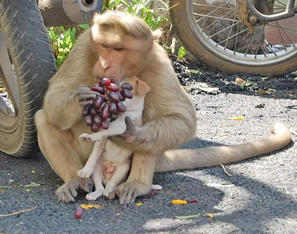 scimmia mamma6